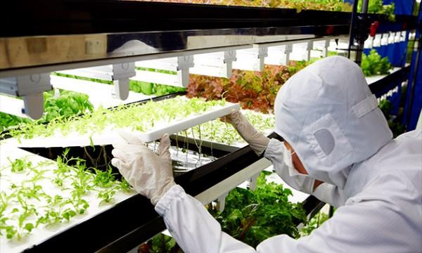 Toshiba решила выращивать овощи вместе с Fujitsu и Sony