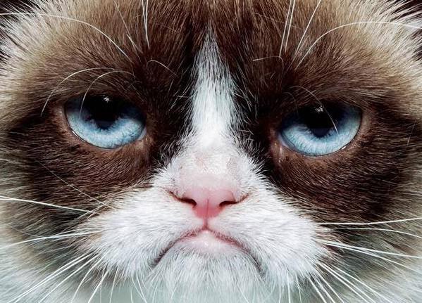 Кошка заработала своей хозяйке 100 миллионов долларов