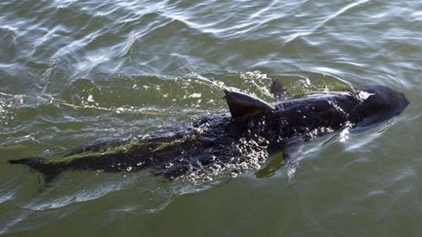 GhostSwimmer: робот-акула на службе ВМФ США