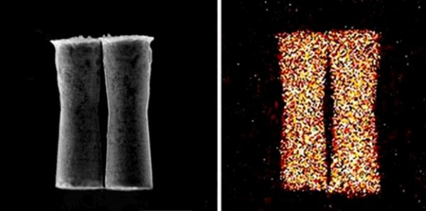 В организм животных впервые запустили микроскопические устройства