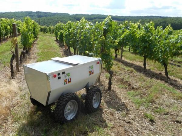 VineRobot: робот-винодел