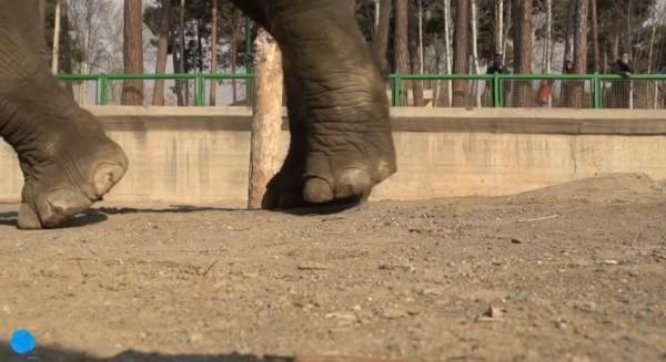 Краш-тест HTC Desire Eye с помощью слона