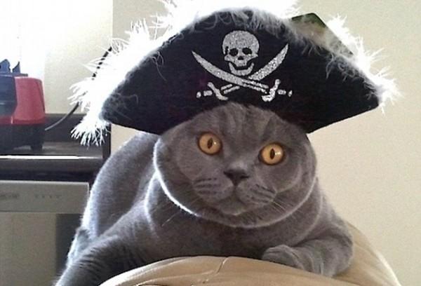 «Поющий» кот нарушил авторские права на YouTube
