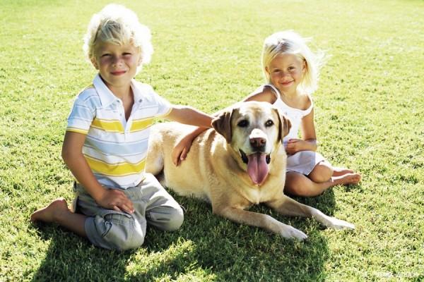 Spotty: фитнес-трекер для собак, предотвращающий ожирение питомцев
