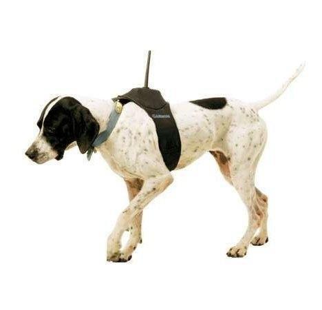 Garmin DC30 – GPS-ошейник для собак