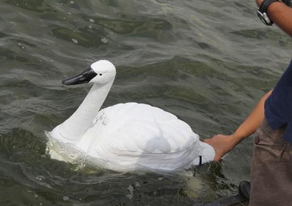 В Сингапуре придумали роботизированных лебедей