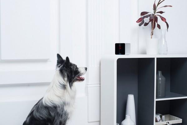 Petcube — камера для общения с домашними питомцами