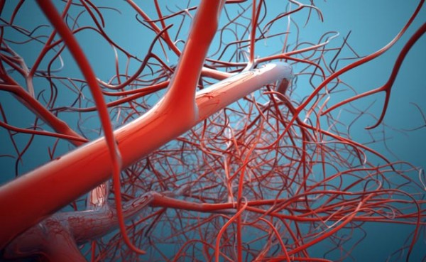 Кровеносные сосуды печатают на 3D-принтере