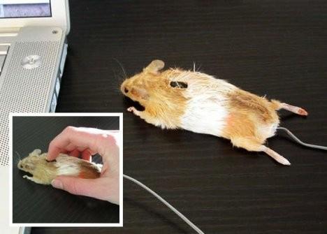 Мышка в виде… мышки