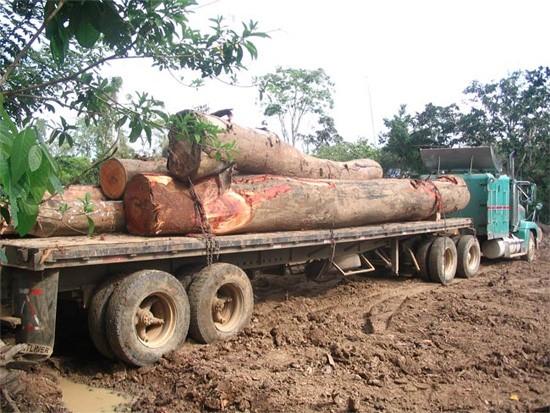 Деревья тропических лесов «прочипуют»