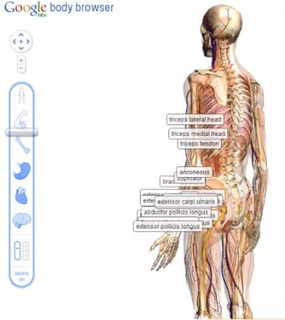 Google Earth для человеческого тела