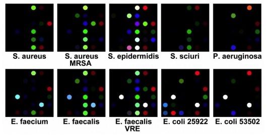 Разработан новый метод идентификации бактерий