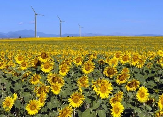 Выработка «зеленой энергии» в США превысила производство атомной