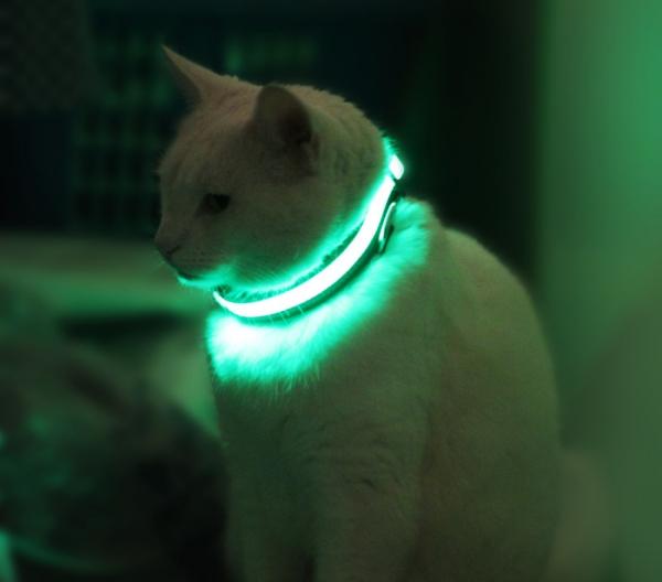 Светящийся ошейник HALO MINI