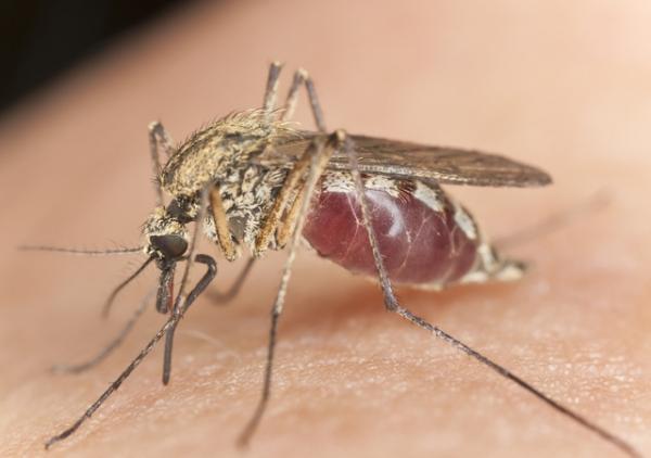 Отвратительно, но интересно: как на самом деле кусают комары