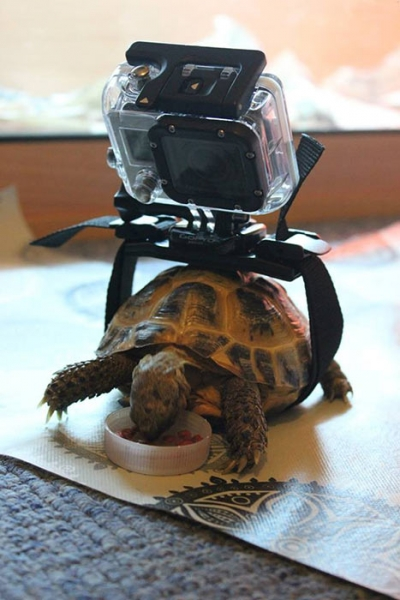 GoPro — неэкстремальная версия