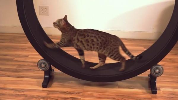 Кошка в колесе? Реально, когда есть One Fast Cat!