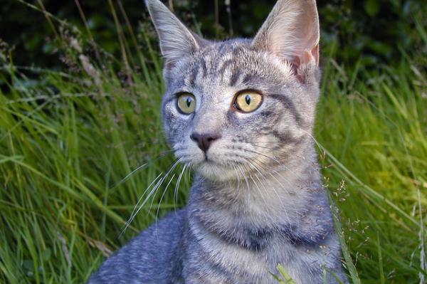 Хакер «взломал» Wi-Fi с помощью кошки