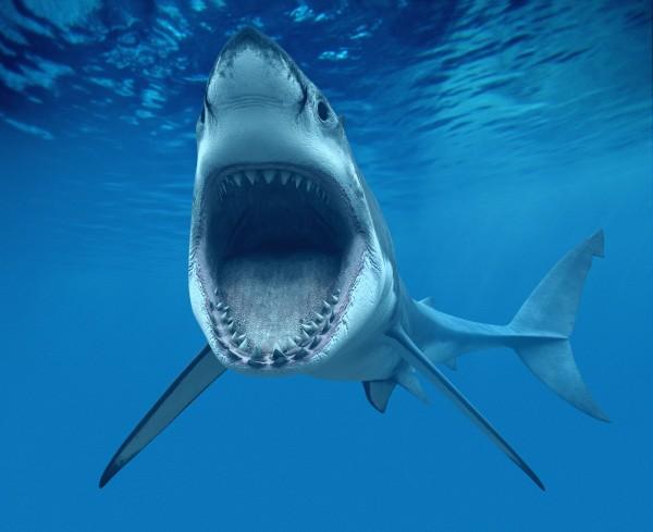 SharkStopper отталкивает акул силой звука