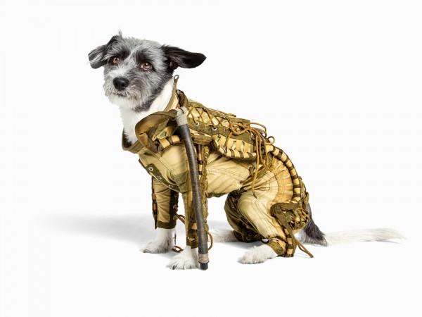 Скафандр для собаки купить не желаете?