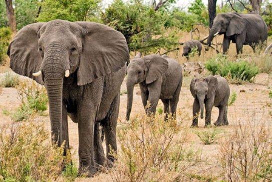 С помощью дронов собираются защищать слонов