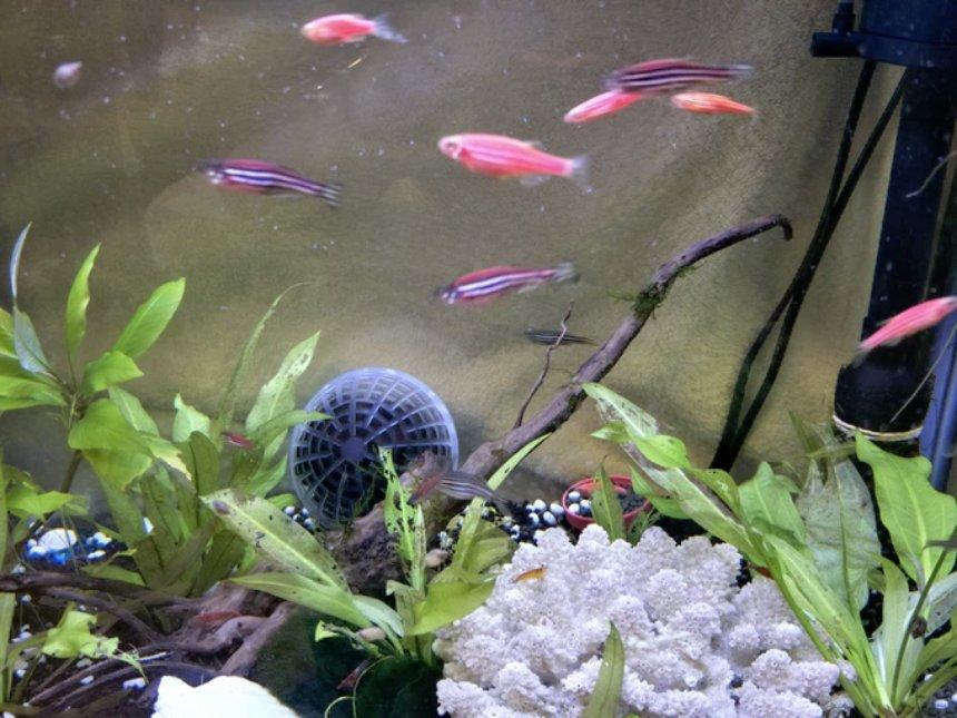 Шар Crystal Orb повысит в разы эффективность очистки домашних аквариумов