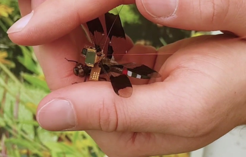 Ученые создали стрекозу-киборга, которая может помочь в военной разведке
