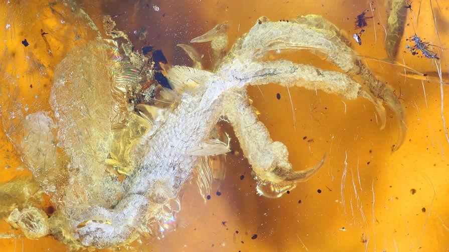 В Китае показали народу птенца, которому 99 миллионов лет