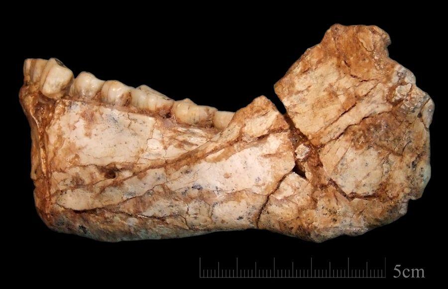 В Африке обнаружили череп человека возрастом 300 000 лет