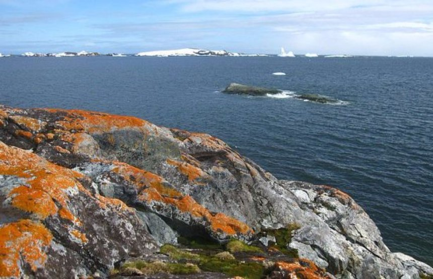 Антарктида меняет свой цвет на зеленый