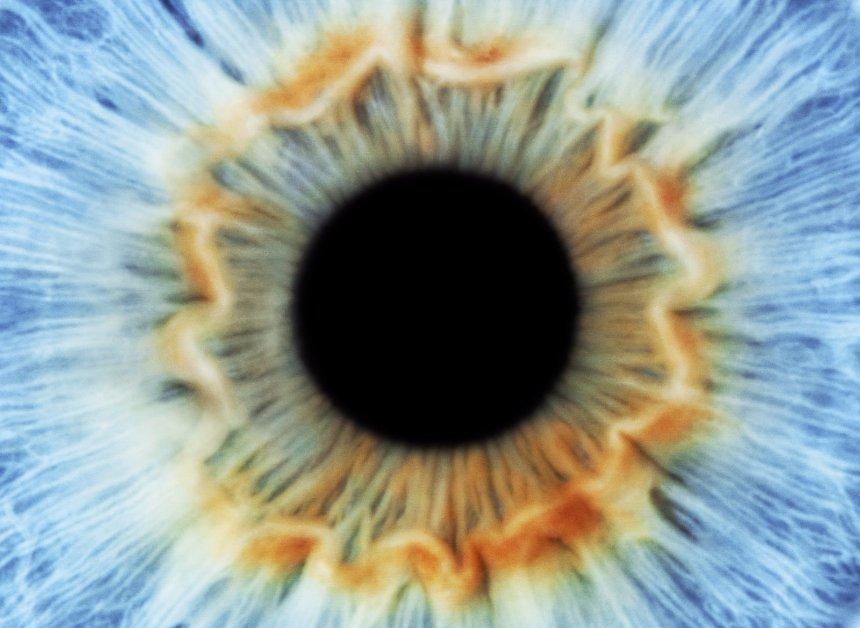 Финские ученые создали искусственную радужную оболочку