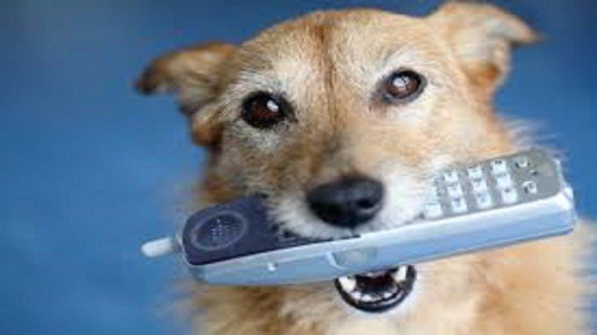 Собаки вскоре смогут звонить и отправлять смс