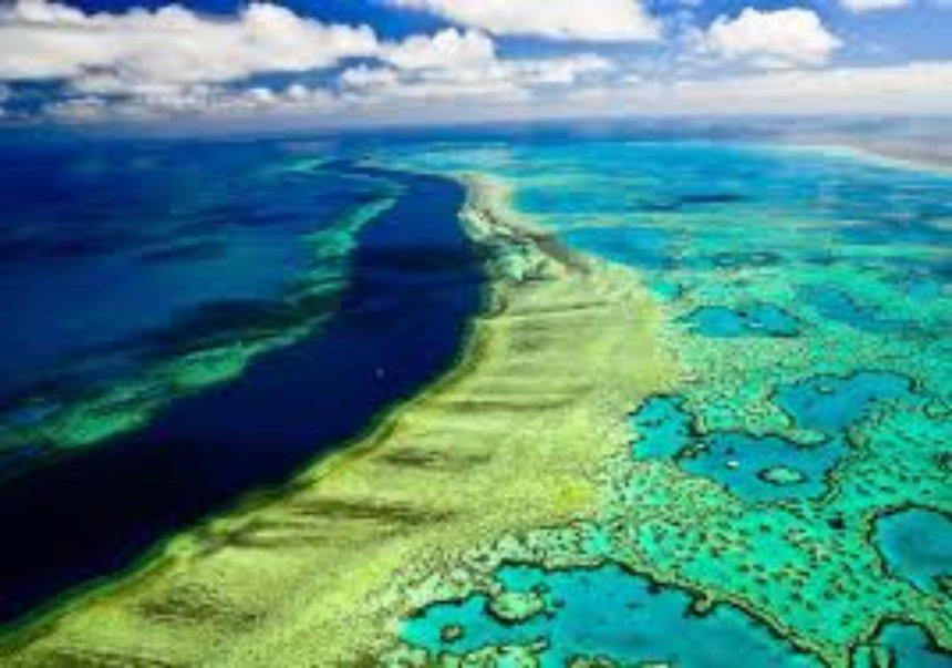 Эксперты оценили стоимость Большого Барьерного рифа