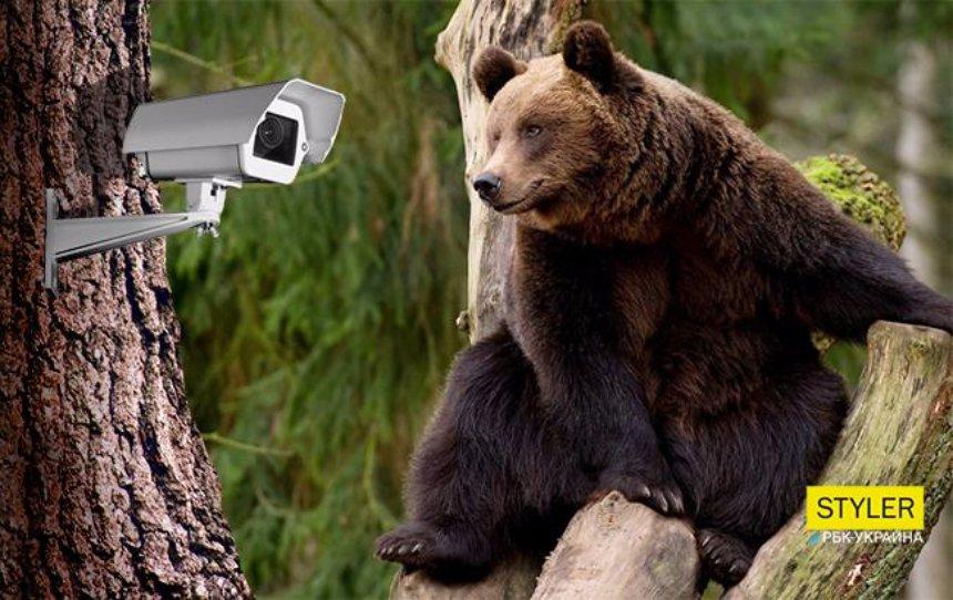 Google сделал доступной трансляцию дикой природы