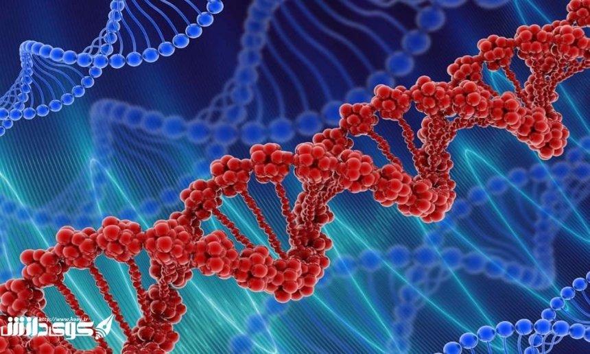 Ученые заявили, что большая часть ДНК является нефункциональной