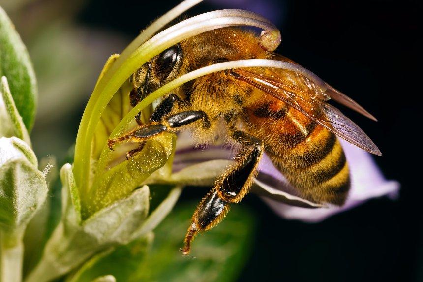 Ученые рассказали, что исчезнет на Земле, если не станет пчел