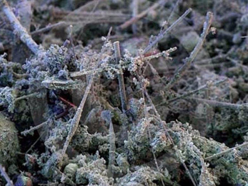 Как влияет пыль в доме на организм человека