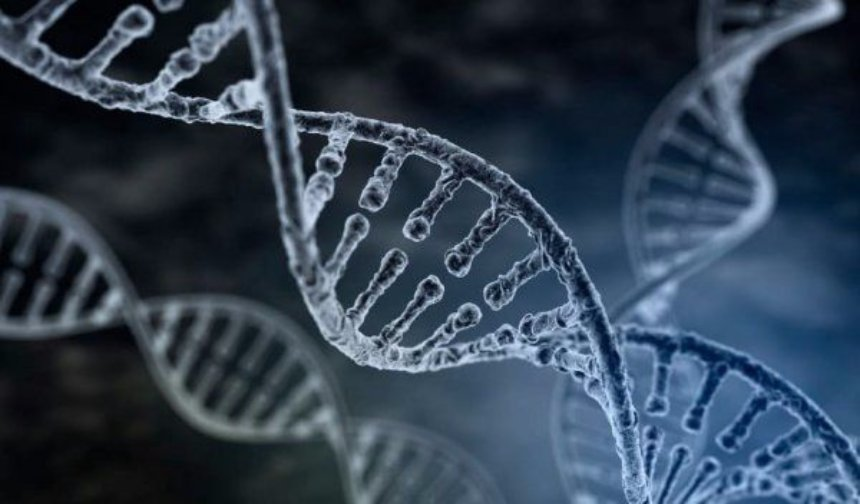 Ученые используют хромосомы для лечения умственной отсталости