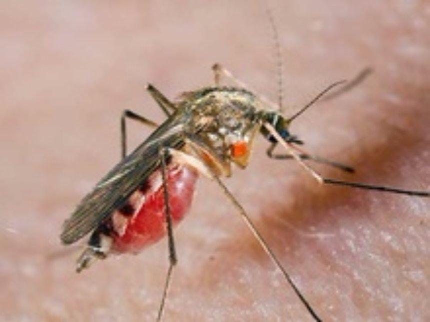 Ученые назвали неожиданную опасность укусов комаров