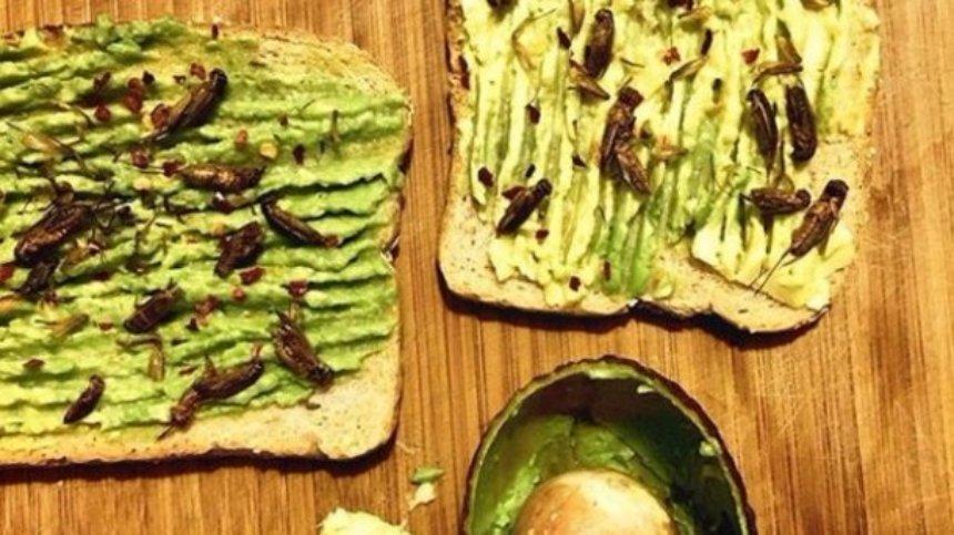 В Америке все больше становятся популярными блюда из насекомых