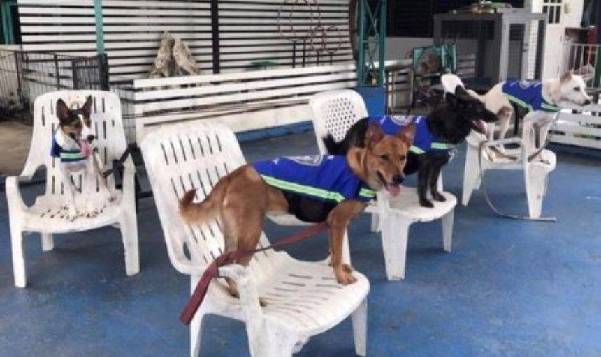 Для собак придумали умные жилеты