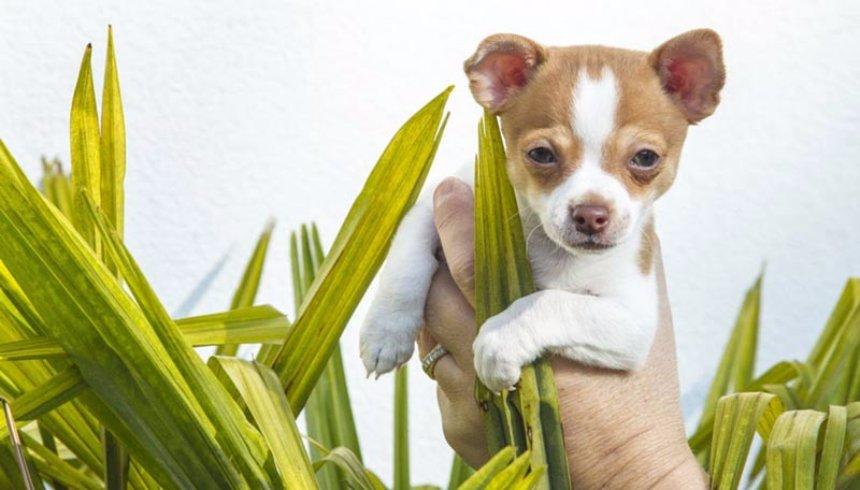 Ученые рассказали, что собаки могут лечить некоторые болезни людей