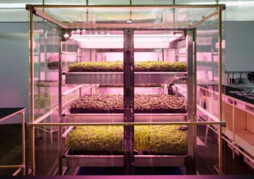 IKEA создала ферму для супербыстрого выращивания зелени