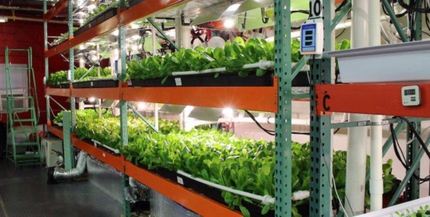 В Филадельфии откроют вертикальную ферму, функционирующую на солнечной энергии