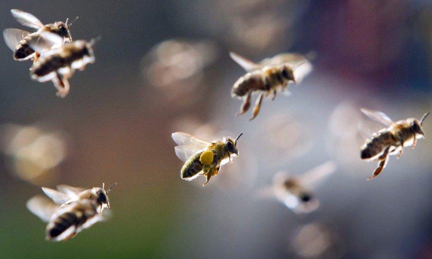 Ученые определили, что пчелы летят домой всегда самым кратким путем