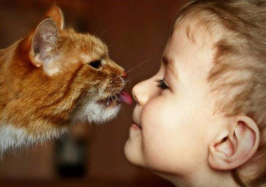 Ученые знали, что коты любят людей больше, чем еду