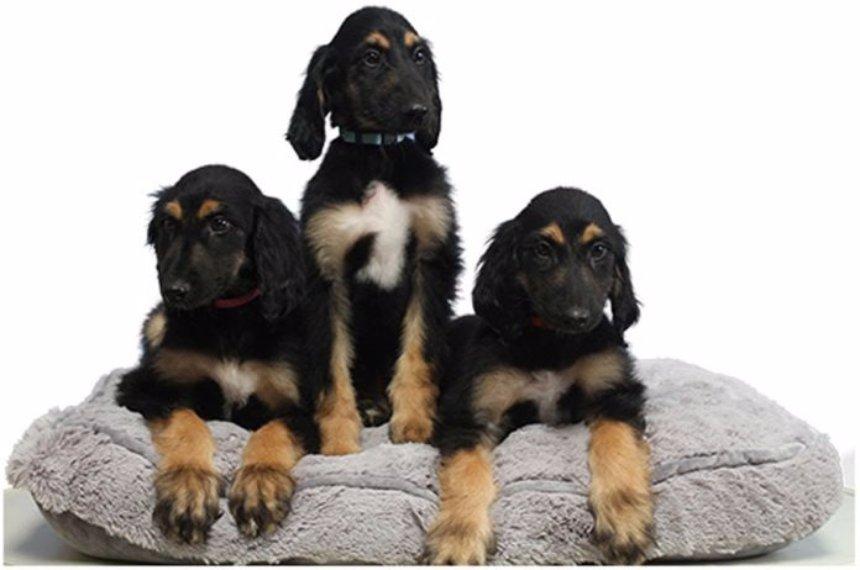 Ученые успешно клонировали клон собаки