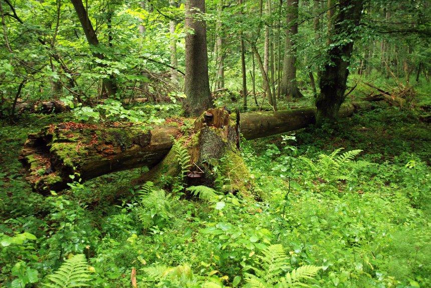 Ученые уверены, что растения могут очищать нашу планету