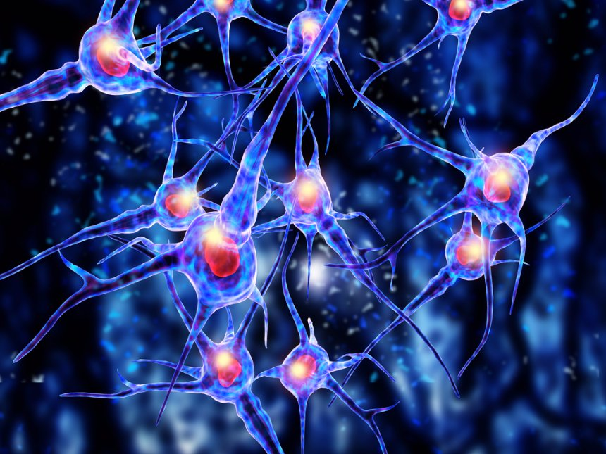 Ученые рассказали, как дружба влияет на старение головного мозга