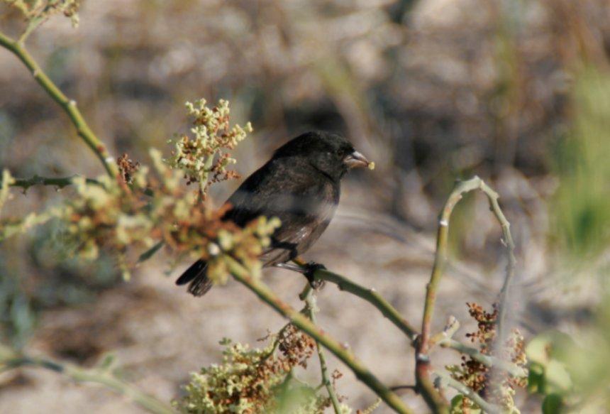 Потерявшаяся в море птица случайно произвела на свет новый вид